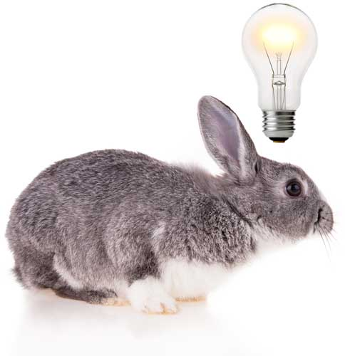 Magic bunny has smart ideas for your network.
